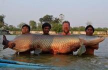 泰国四钓友耗费两小时钓获460斤罕见巨滑舌鱼