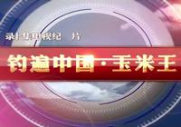 钓遍中国玉米王