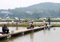 坑塘釣魚技巧