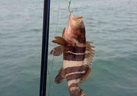 广东南澳岛之行海钓漂亮的热带鱼
