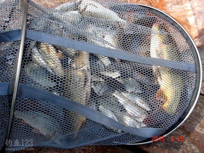 作钓云竹湖的鱼获