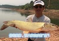 夏季庫釣太平湖斬獲大鯉大草魚