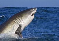 保护鲨鱼,从海钓爱好者做起