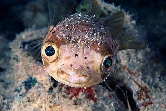 深海魚的品種主要有老虎斑