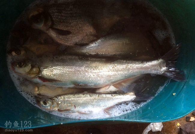 借渔排老板的大鱼桶来装鱼