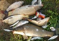 寺溝水庫垂釣野生大鯉魚