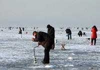 冬季钓鲫鱼技巧方法