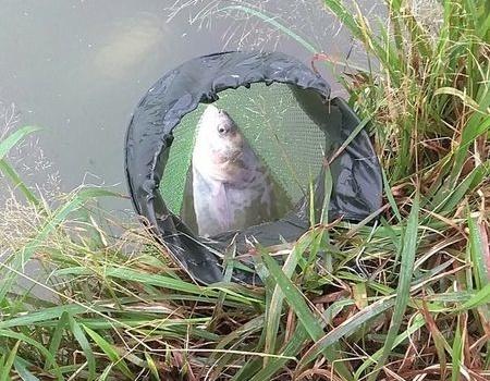 冒大雨野塘耍耍,第一次海竿收获不少