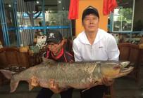 四川父子路亚钓起百斤重大鳡鱼