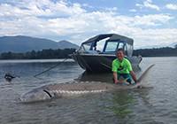 加拿大9岁男孩捕获272公斤大鱼后放生