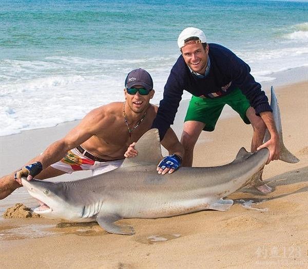 空手拉了88条鲨鱼