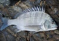 路亚立鱼的渔具搭配技巧