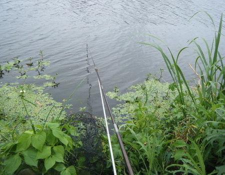春季陰雨天氣大沖河釣鯉魚鳊魚鯽魚