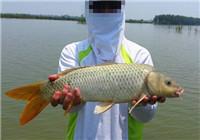 秋季湿地手竿配合商品饵爽钓鲤鱼鳊鱼