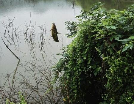 龙尚水库,当地钓友如是说 蚯蚓饵料钓翘嘴
