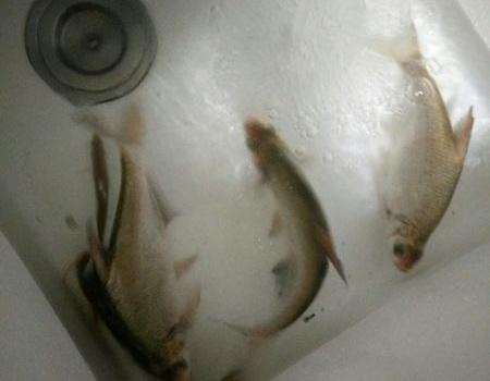 瘾来了,夜钓太湖 蚯蚓饵料钓鳊鱼