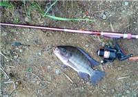分享夏季钓罗非鱼的实战技巧(一)