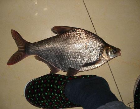 冬季雨天野湖手竿钓鲫鱼鳊鱼