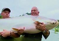 《钓鱼视频》 湄公河路亚上百公斤巨鲶