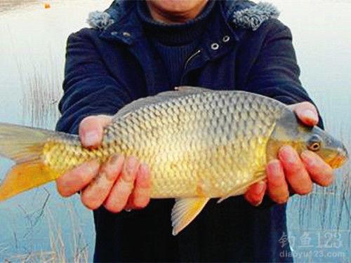 夏季钓鲫鱼的钓点和饵料搭配技巧 下