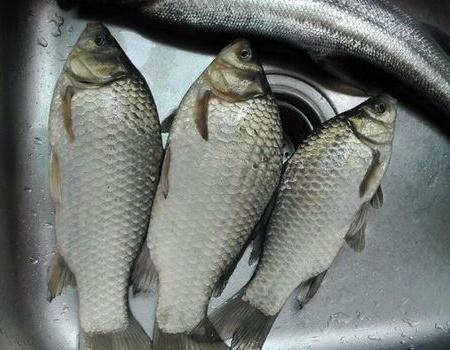 第一次钓鱼塘,目标鱼野生大板鲫 蚯蚓饵料钓翘嘴