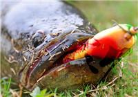 夏季钓黑鱼的四个技巧(上)