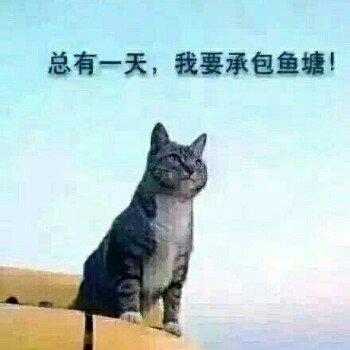 王海波Whb