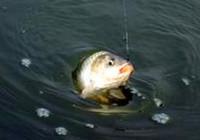 《魚餌配制視頻》開制釣鯽魚散炮窩料的技巧