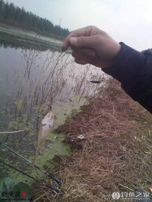 风精油能钓鱼吗图片