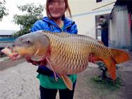 解密野生鲤鱼的生活习性和垂钓技巧