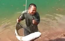 《垂钓对象鱼视频》 河边抛竿成功钓获大草鱼