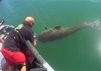 《水库钓鱼视频》 水库钓获比人还重的巨大鲶鱼