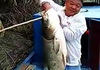 《水库钓鱼视频》 水库野钓擒获40斤大鲢鳙鱼