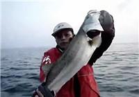 《路亚钓鱼视频》 男子大连河口路亚钓擒获大翘嘴鱼