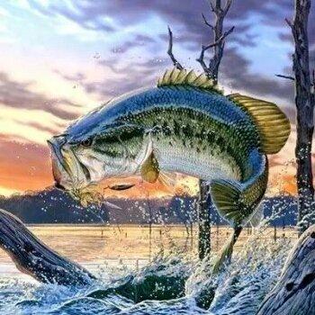 钓鱼超新手