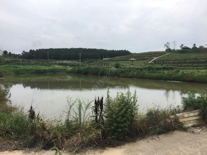 红安县嘉景种植专业合作社