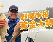 《白條游釣》放大招了,野塘岸筏黃金大鯉魚!