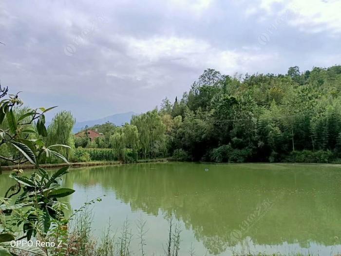 秦巴山垂钓园