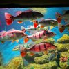 fishesalot