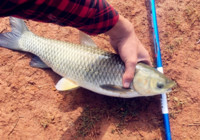 秋季野钓草鱼的两大要素!