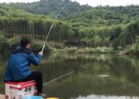 《户外老曹》想钓鲫鱼却来了一堆草鱼鲢鳙 小钩小线拉爽了!