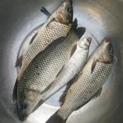 【技巧-库钓鲤鱼】总结春季库钓鲤鱼四大选择