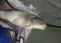 不同的鱼情水情要掌握不同的垂钓方法