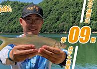 《白條游釣》 白鰷游釣太平湖,奔波三地探釣,終遇西山大黃尾