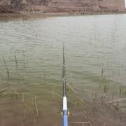 【技巧-野钓鲤鱼】春季野钓鲤鱼钓位、线组、饵料的远择