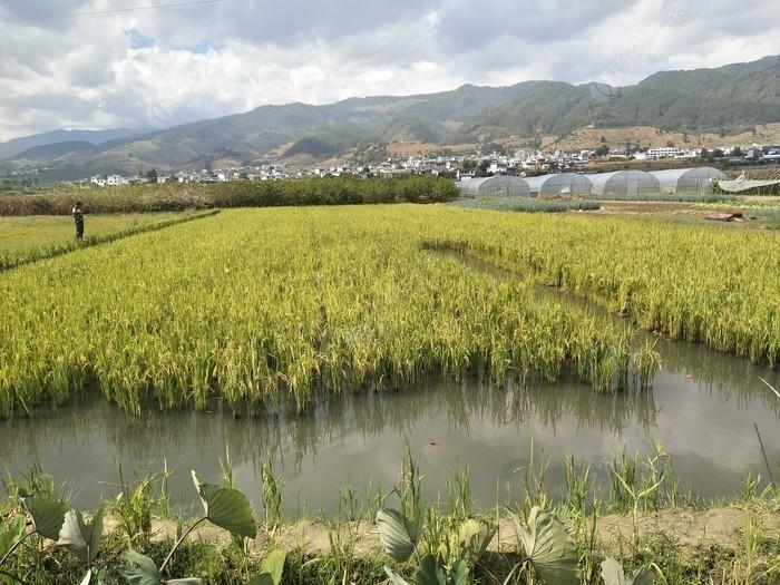 新城坝稻花鱼