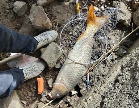 再次试弹大道河,偶遇大鲤和鳜鱼
