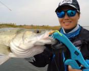 《蓝旗鱼路亚》小河海鱼多,软尾VIB钓上了几种意外的鱼?