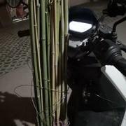 不忘初心,一竿入魂,做一支属于自己的竹鱼竿