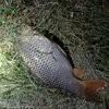 爱钓鱼的小马哥哥